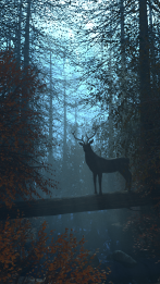 forest41